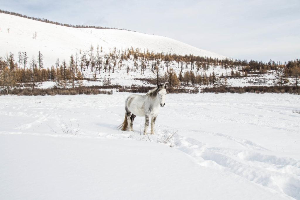 cavallo bianco neve